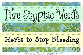 5 styptic weeds - herbs to stop bleeding